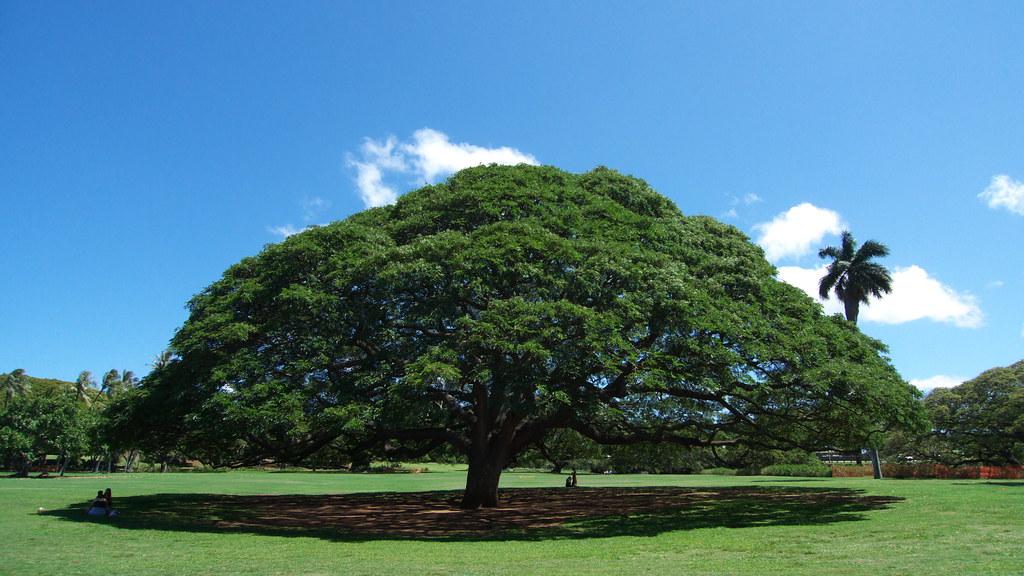 ハワイのモアナルア・ガーデンへCMで有名になった木を探しに行こう♪