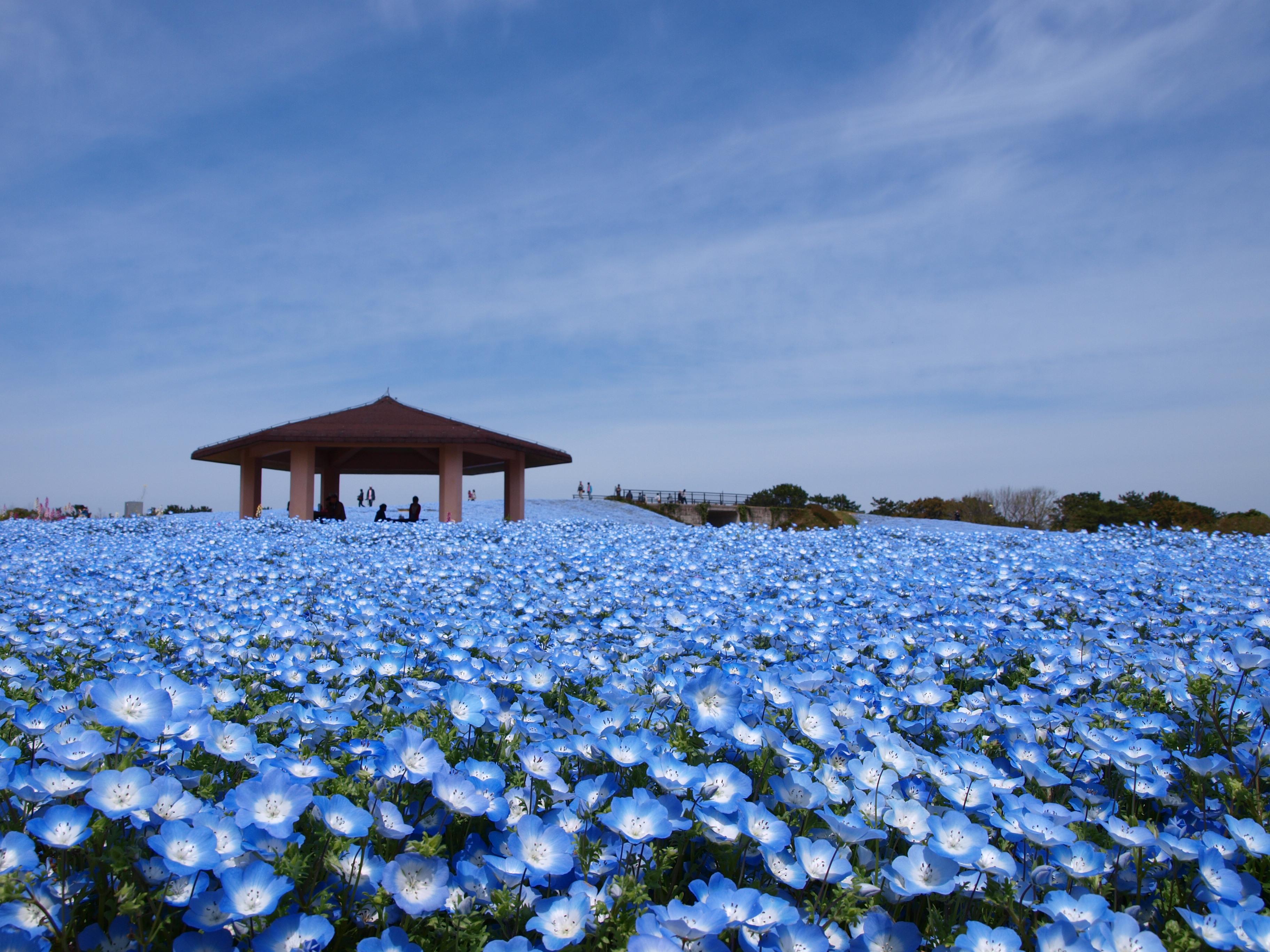 福岡市の絶対楽しい観光スポットを紹介!福岡の人気グルメや体験スポットも!