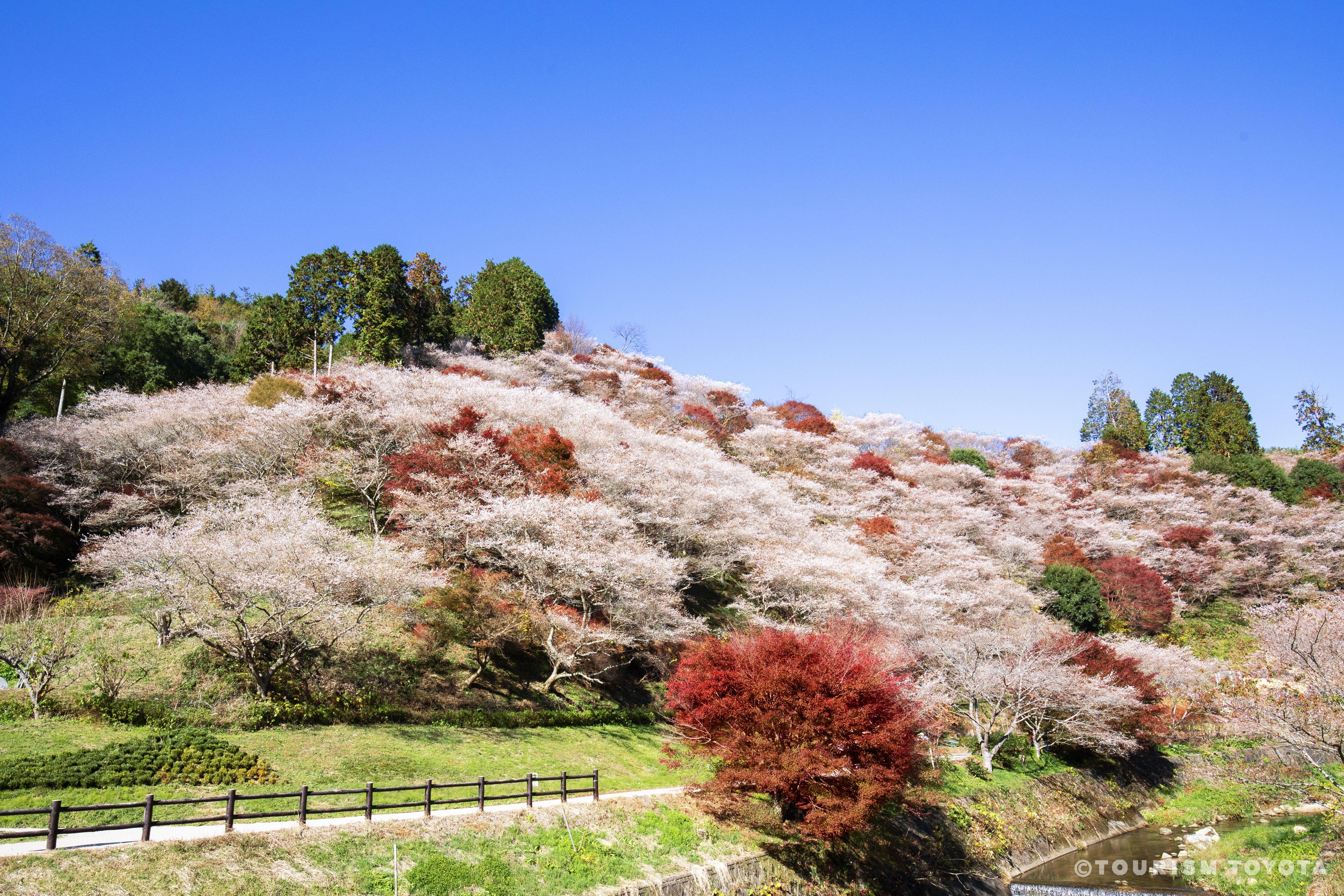 豊田市の人気体験から観光スポットまで一挙にご紹介!
