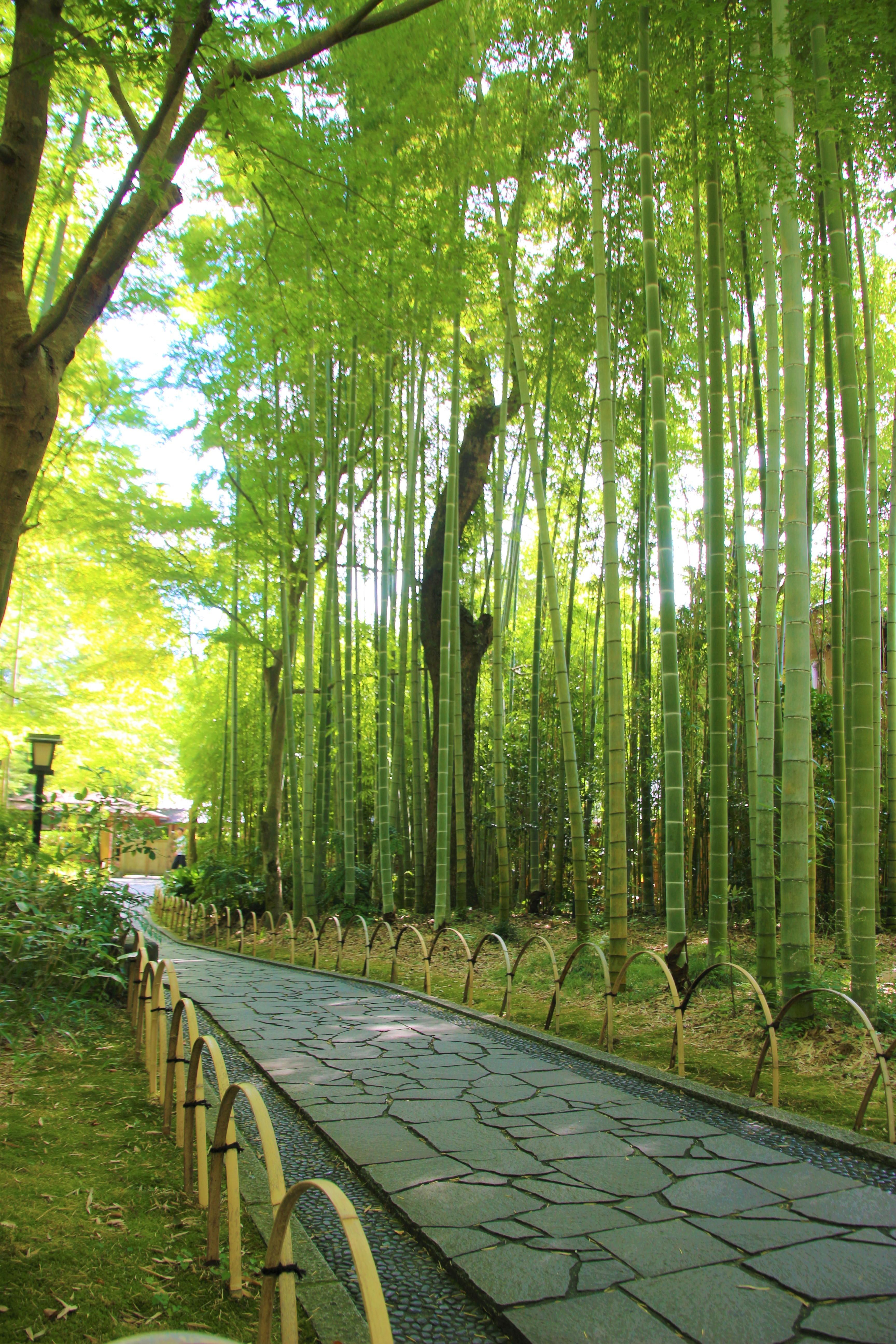 伊豆市は自然・歴史・文化が薫る魅力的なまち!人気の観光スポットを紹介!