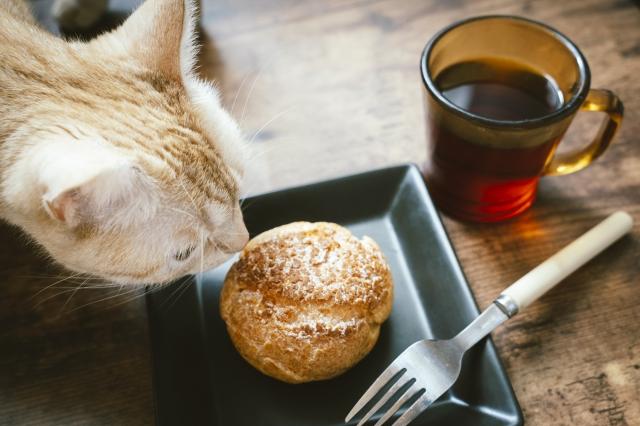 川崎のおすすめ猫カフェを紹介!人気のお店から里親募集の店舗まで!